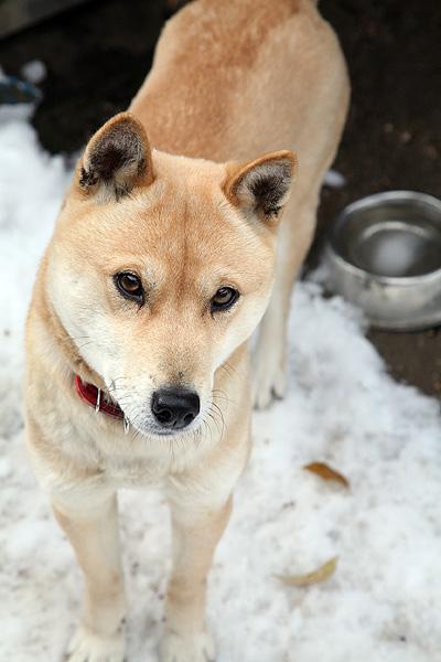 雪の中、鈴さん_b0123467_11343034.jpg