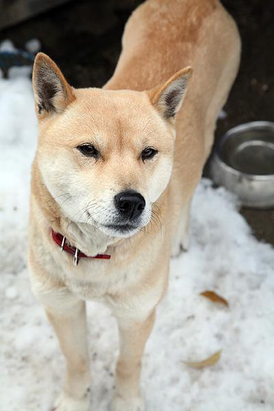 雪の中、鈴さん_b0123467_11344892.jpg