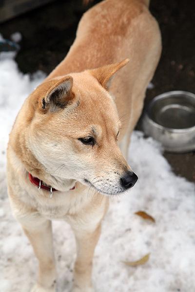 雪の中、鈴さん_b0123467_1134714.jpg