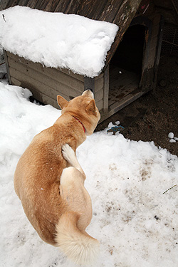 雪の中、鈴さん_b0123467_11435031.jpg