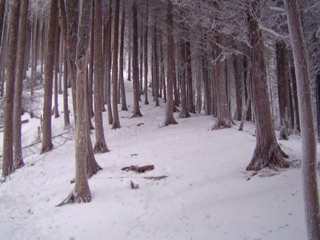 雪山登山_e0096277_18525145.jpg