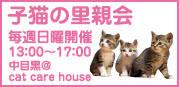 【小虎】 正式譲渡!_a0066779_2124769.jpg