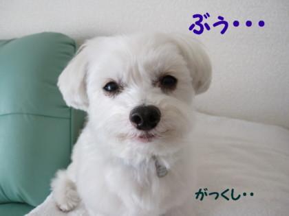 b0193480_12111360.jpg