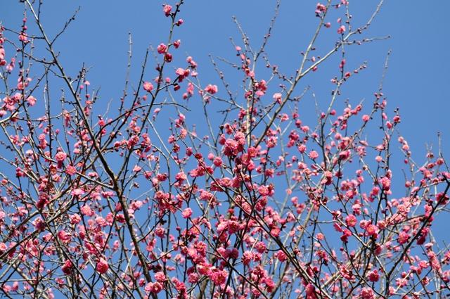 もう咲いてますよ!_a0126590_065656.jpg