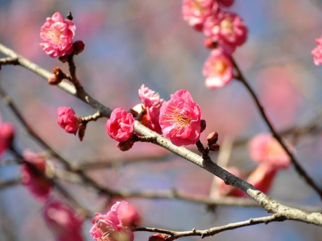 もう咲いてますよ!_a0126590_071450.jpg
