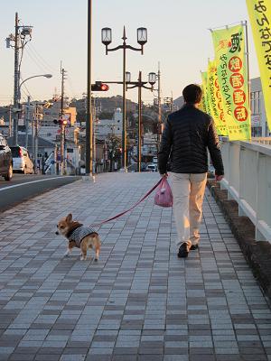 散歩の途中で出会ったワンコ_d0169411_22433547.jpg