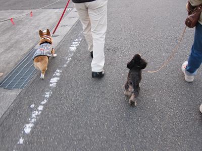 散歩の途中で出会ったワンコ_d0169411_22574625.jpg