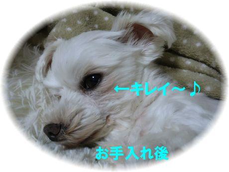 b0206444_145197.jpg