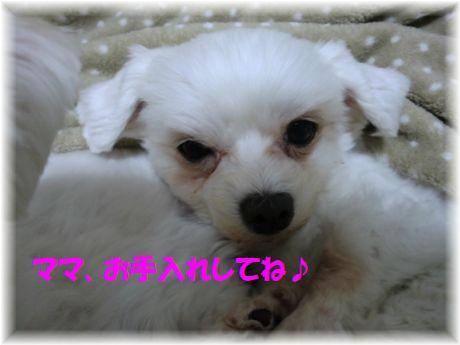 b0206444_1454490.jpg