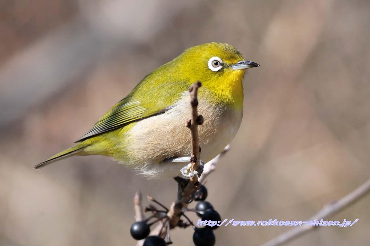 鳥の初撮り_c0129047_22484414.jpg