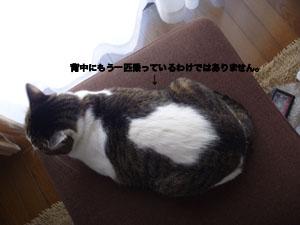 f0238772_1343859.jpg