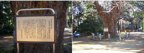 赤坂氷川神社には歴史がいっぱい_d0183174_15554769.jpg