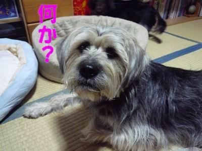 b0140680_2341482.jpg
