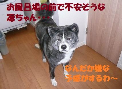 f0121712_2234268.jpg
