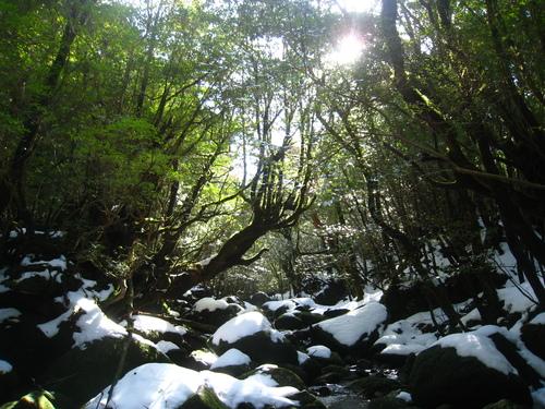 太鼓岩の雪、 美しい。_b0160957_17254916.jpg