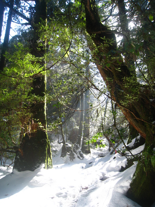太鼓岩の雪、 美しい。_b0160957_1735268.jpg