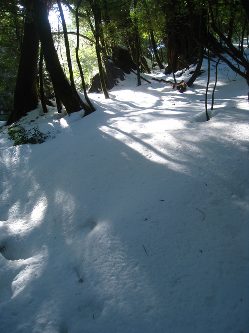 太鼓岩の雪、 美しい。_b0160957_17491912.jpg