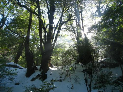 太鼓岩の雪、 美しい。_b0160957_17531617.jpg