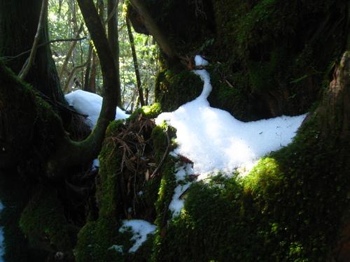 太鼓岩の雪、 美しい。_b0160957_17563095.jpg
