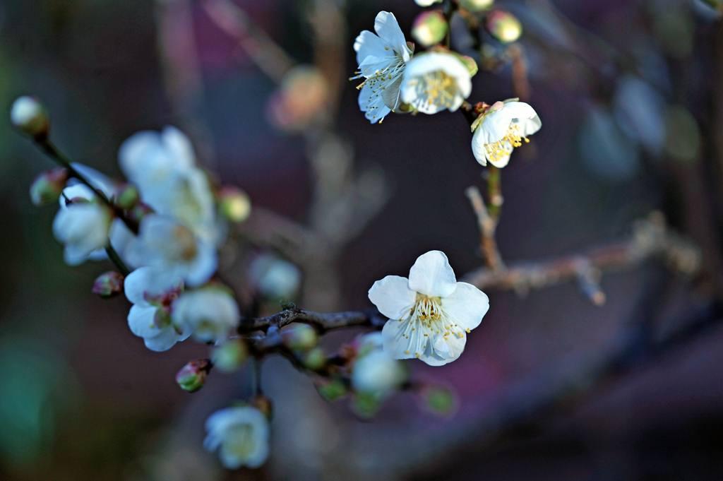 天体撮影用カメラで鳥を・・・/我が家の庭は冬と春が_b0024798_6484779.jpg