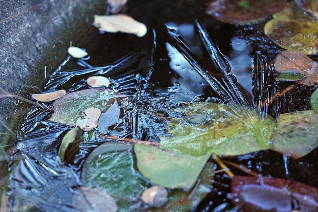 天体撮影用カメラで鳥を・・・/我が家の庭は冬と春が_b0024798_6493659.jpg