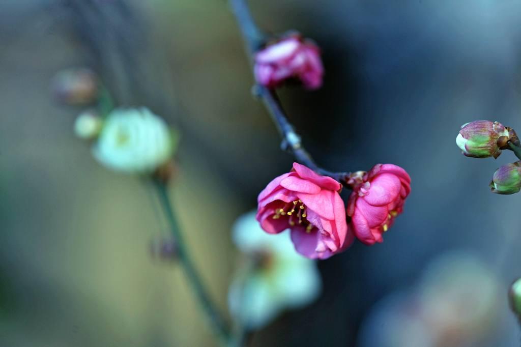 天体撮影用カメラで鳥を・・・/我が家の庭は冬と春が_b0024798_649380.jpg