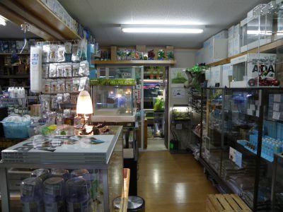 店舗潜入その3とジャパンラミレジィ画像_a0193105_7123054.jpg