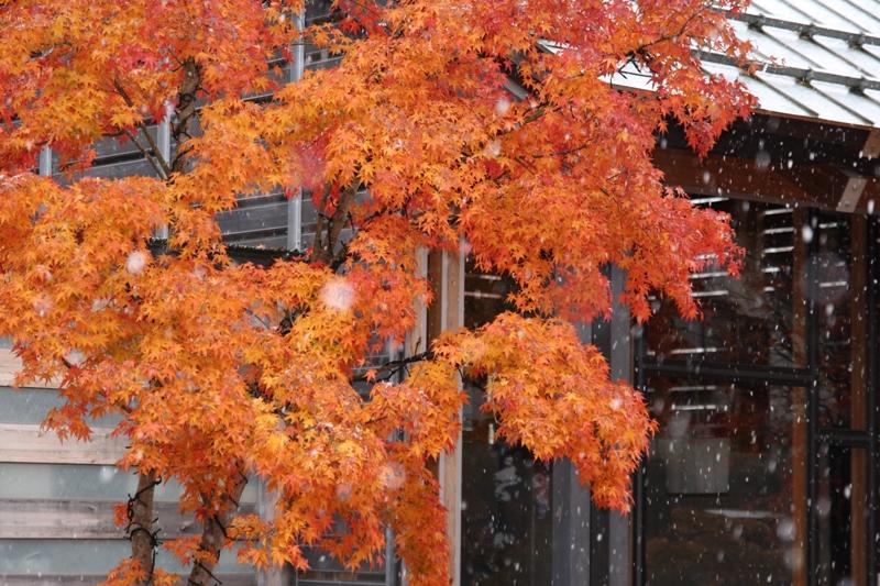 紅葉に雪_f0091207_21441059.jpg