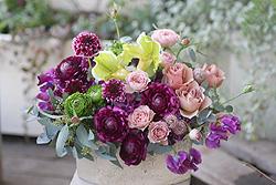 春の花_c0114811_23343875.jpg