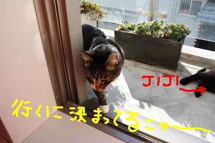 d0009175_19583256.jpg