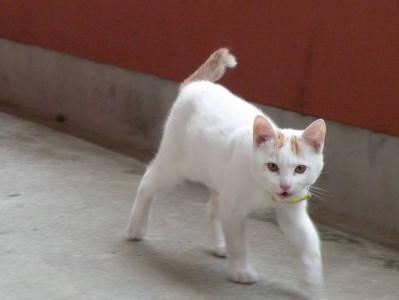 猫横丁_c0193077_22434793.jpg