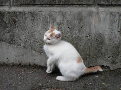 猫横丁_c0193077_22443147.jpg
