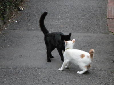 猫横丁_c0193077_22445998.jpg
