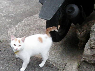 猫横丁_c0193077_22452784.jpg