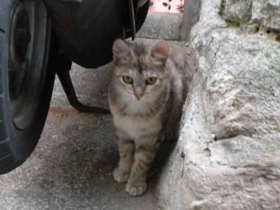 猫横丁_c0193077_22455221.jpg