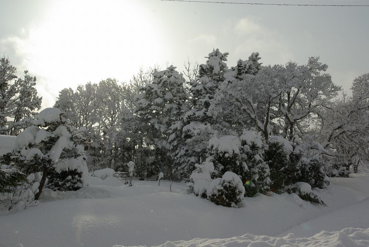 すっぽり雪の中_a0107184_21789.jpg