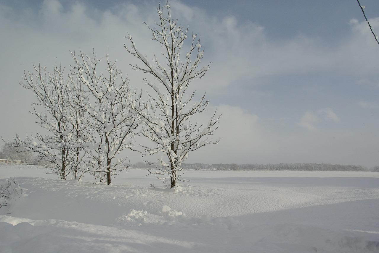 すっぽり雪の中_a0107184_27469.jpg
