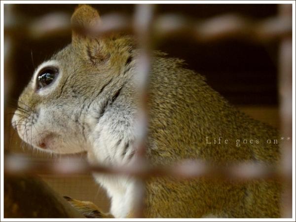 天王寺動物園 プリチィリス♪_b0155684_18393388.jpg