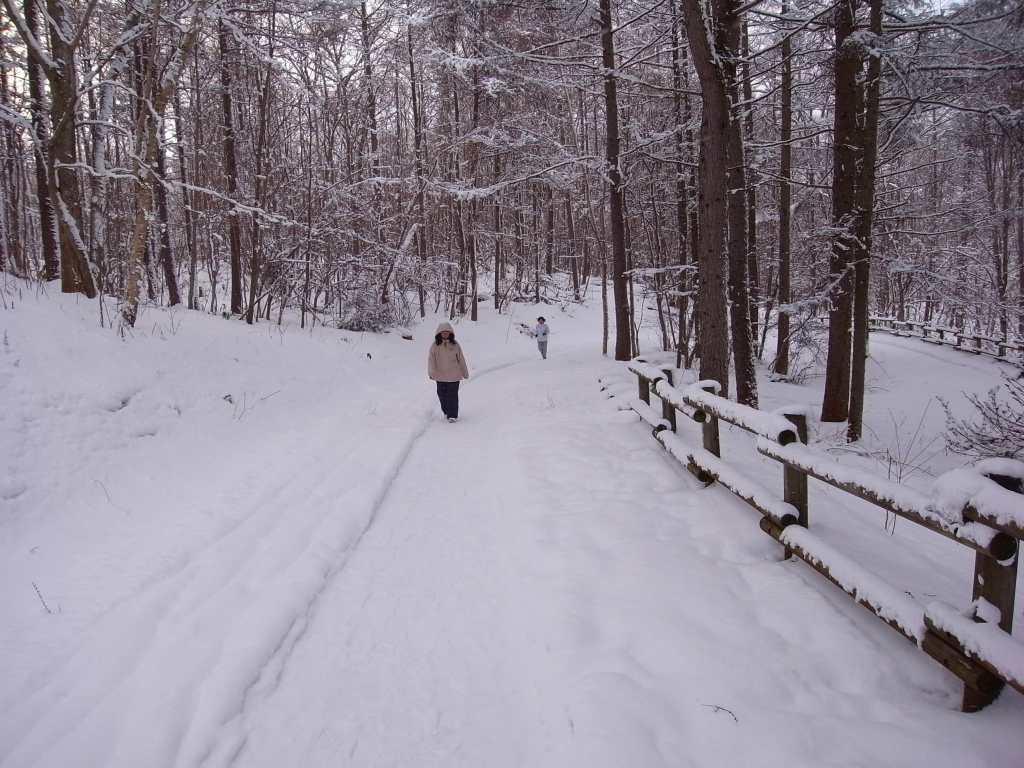歩くスキーコース_f0138096_937560.jpg