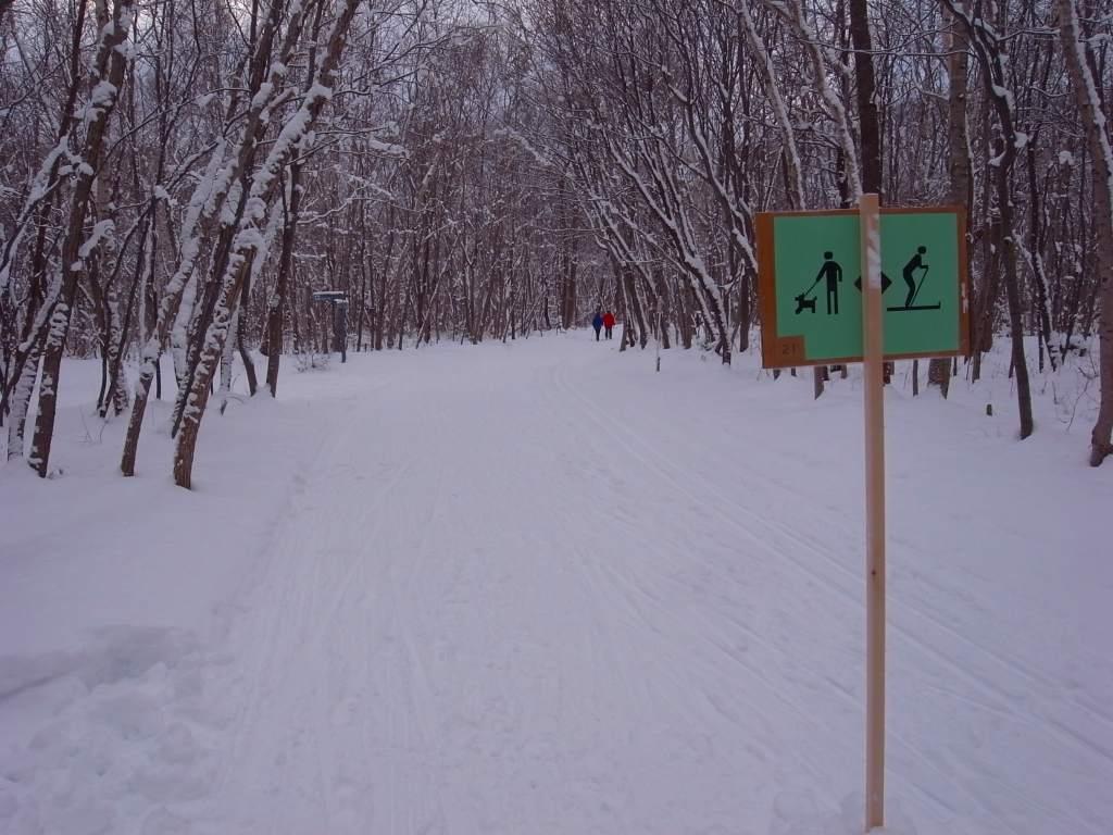 歩くスキーコース_f0138096_9391474.jpg