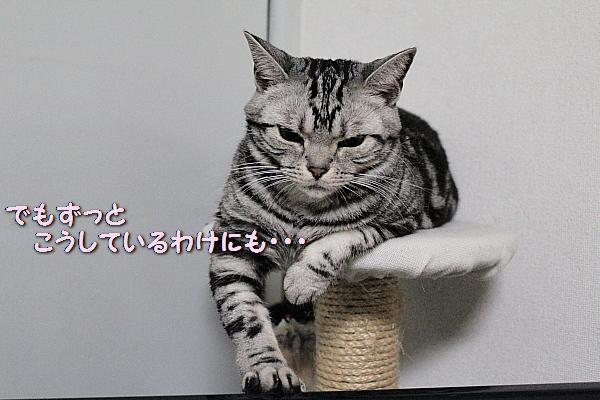 c0211109_5565374.jpg