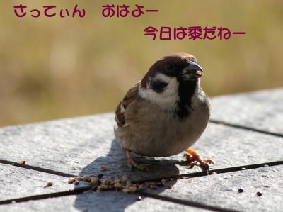 b0158061_21362762.jpg