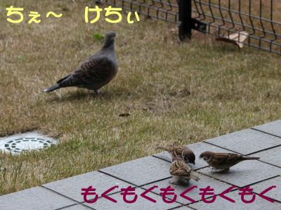 b0158061_2139928.jpg