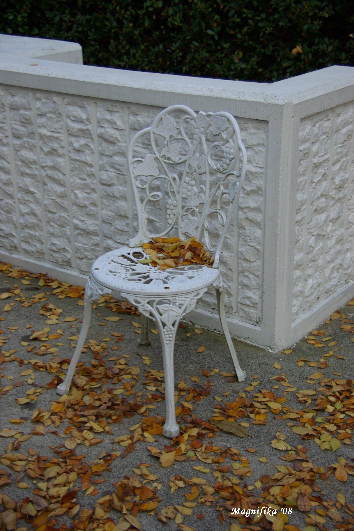 庭の贈物:落葉 gift from my garden: Fallen leaves_e0140365_20435661.jpg