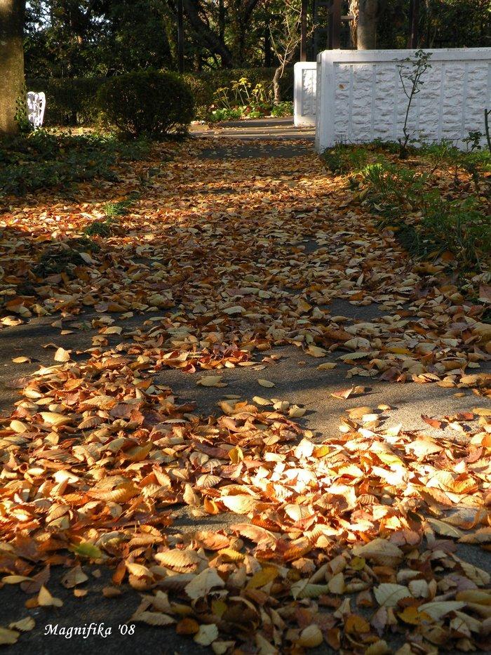 庭の贈物:落葉 gift from my garden: Fallen leaves_e0140365_20451023.jpg