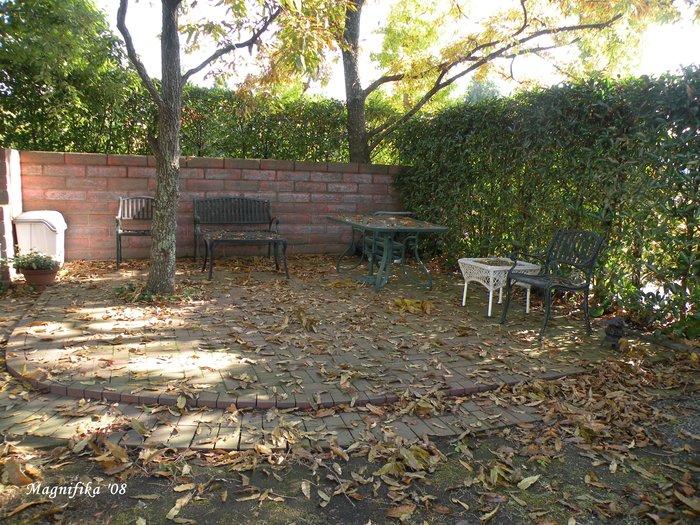 庭の贈物:今朝の庭 gift from my garden: my garden this morning_e0140365_2093035.jpg
