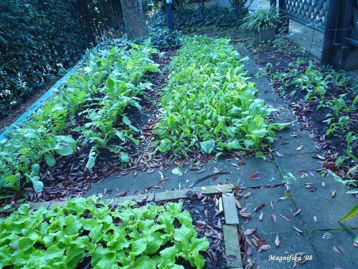 庭の贈物: 小さな野菜畑 gift from my garden: Vegetable garden_e0140365_2133533.jpg