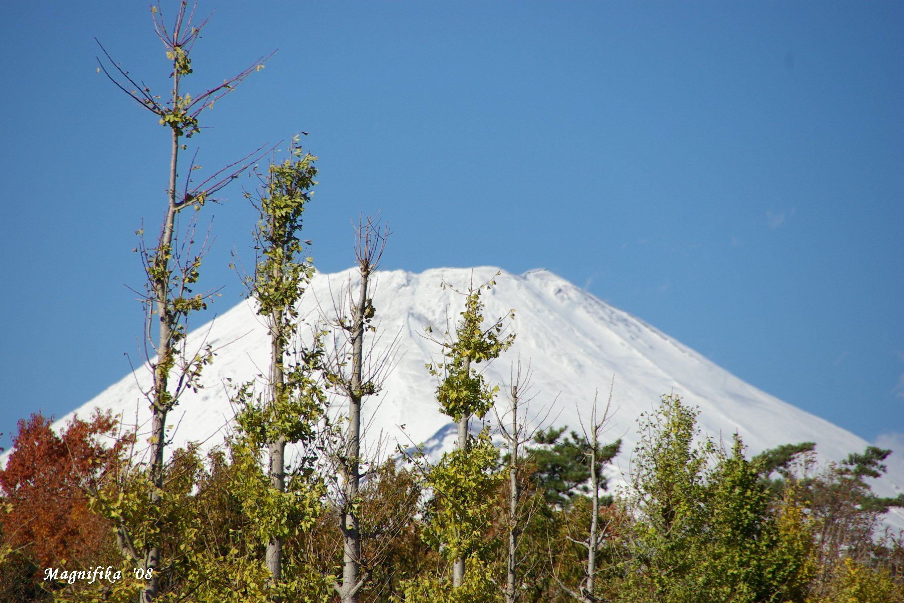 今日の富士山 Today\'s Mt. Fuji November 30, 2008_e0140365_21382788.jpg