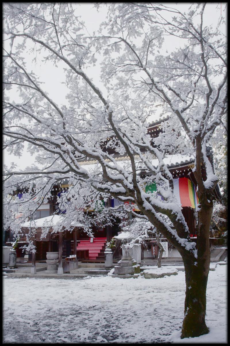 雪景色 <今熊野観音寺>_f0021869_23413626.jpg