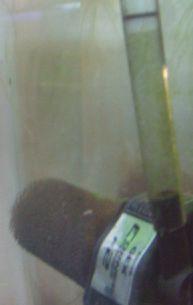 サテライトと水中ポンプ_a0193105_190128.jpg